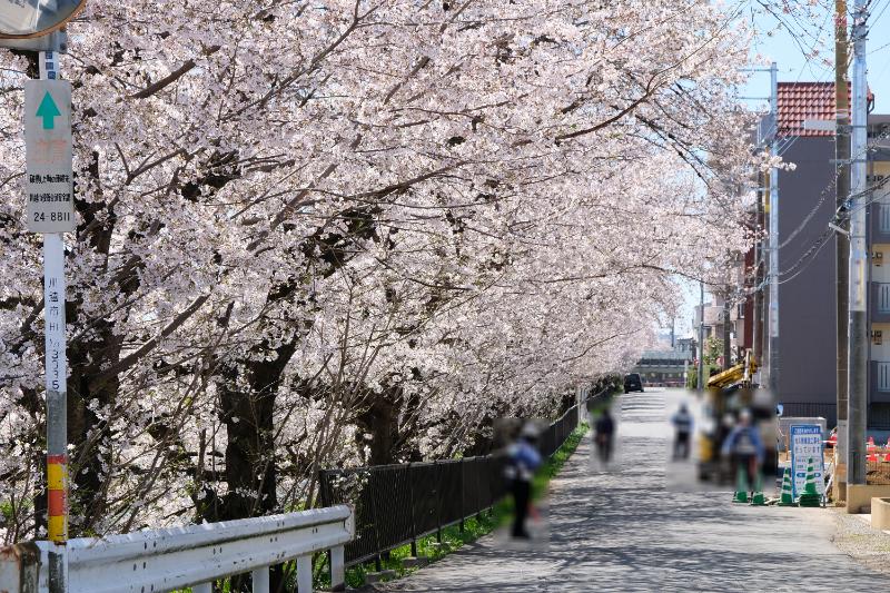 川木建設 土地活用営業ブログ 桜